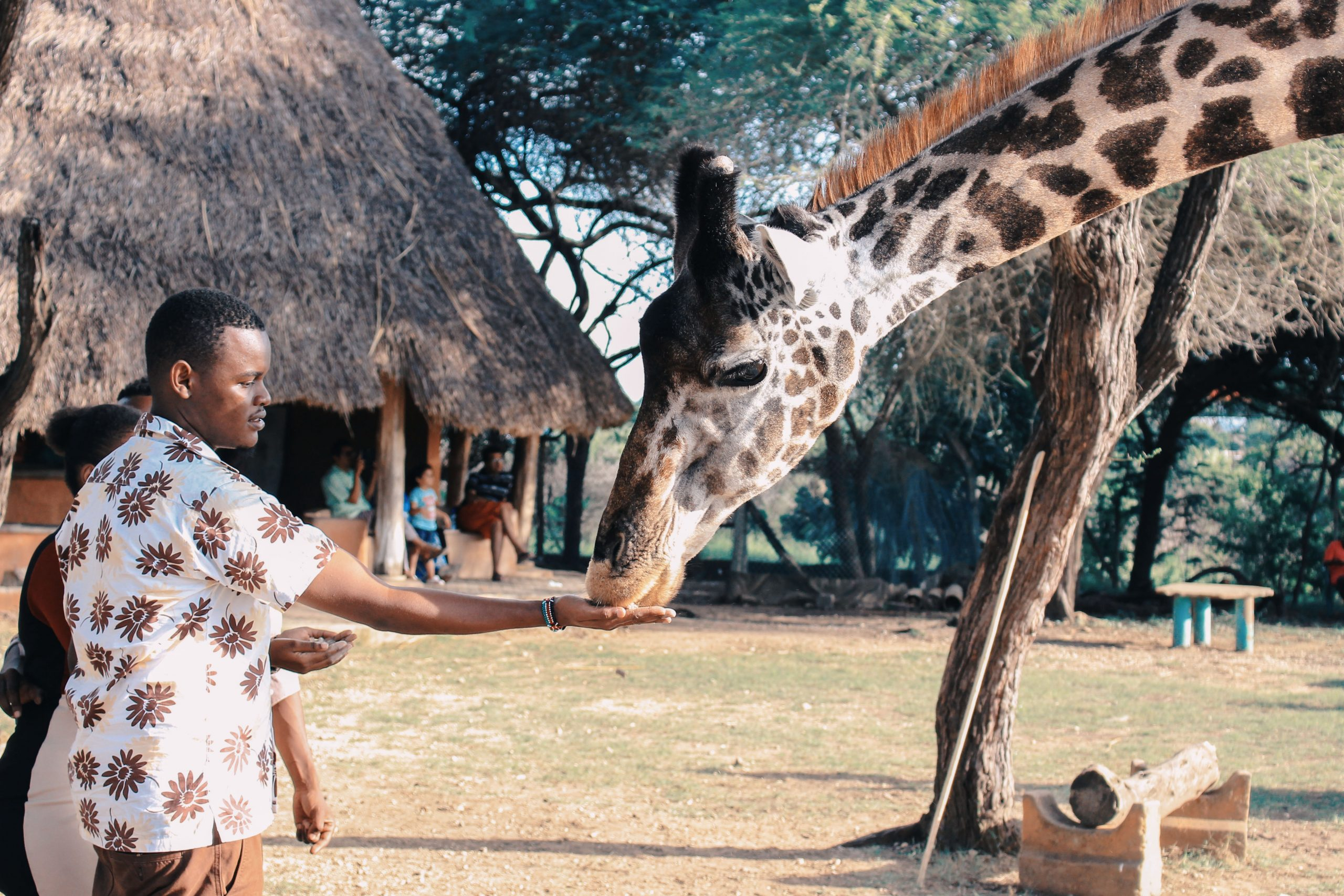 Read more about the article 7 Reasons why Summer is the best time for vacation in Africa